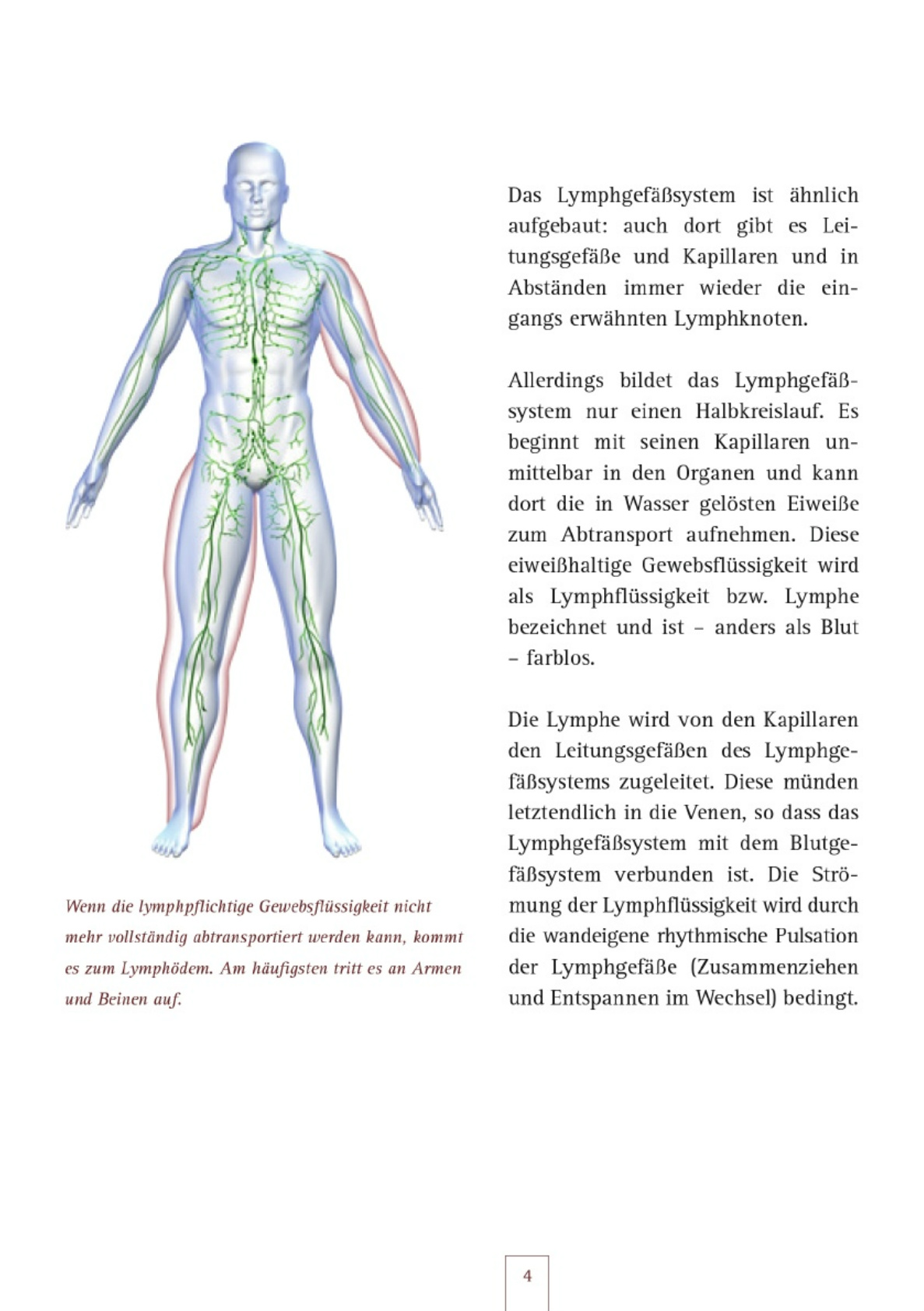 Großartig Beinvenen Anatomie Bilder - Anatomie Ideen - finotti.info